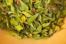 lady bonins buchu leaves